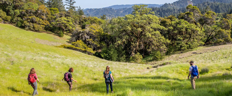 four students walk across a green meadow